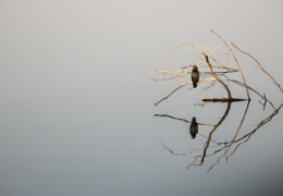 Minimalist Photography: Concept and Key Components
